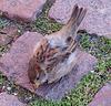 GENTIL PETIT PIAF / NICE LITTLE BIRD