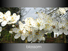 Blossom white with gradient background