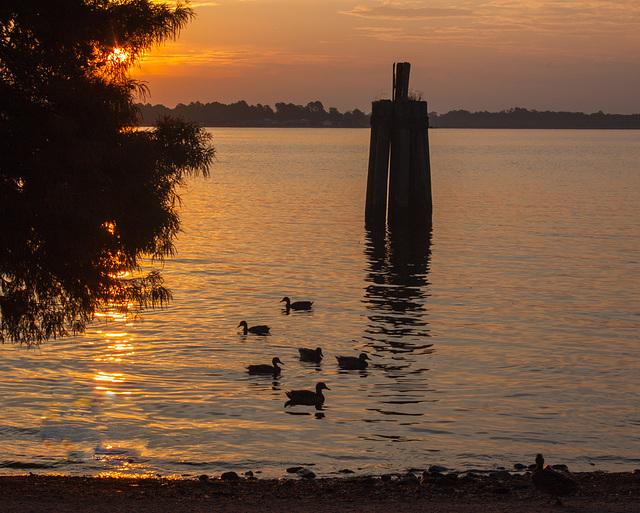 Sunrise, Neuse River