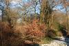 Sunny Snowy Woodland