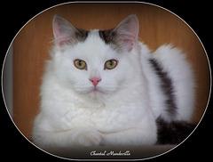 Gigi (5)