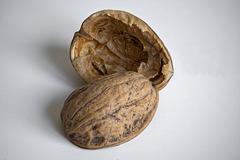 Le destin d'une noix 3