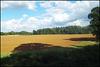 shadows on a golden brown field