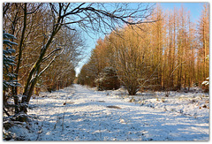 Sunny Winter Day, Wykeham Forest, North Yorkshire