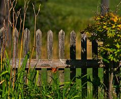 noch alle Latten im Zaun