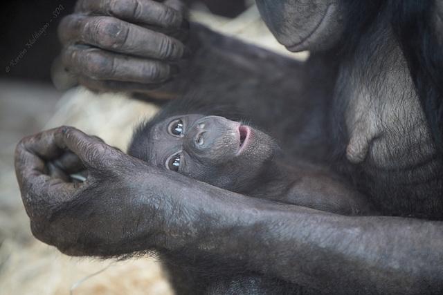 Banbos Baby (Wilhelma)