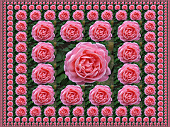 A bed of roses ;-)
