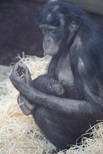 Banbo und ihr Baby (Wilhelma)