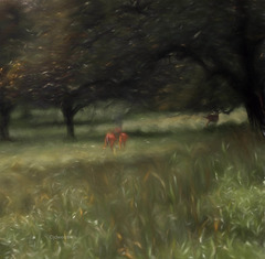 deer in the orchard