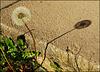 Etre l'ombre de soi-même qu'un souffle de vent peut emporter... [ON EXPLORE]