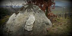 Le rocher qui dort d'un Oeil, dans les vignes, the rock that sleeps with one eye, in the vines