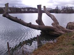 le lac le tronc et l'île