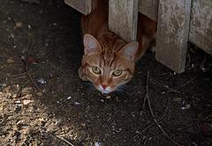On a échangé quelques mots ( moi bonjour le chat , lui miaou )  et chacun a repris son chemin