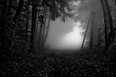 """Toward the light - Dem Licht entgegen - """" - Black & White Friday - """""""