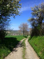Rund um Heimersheim