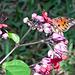 ChasingButterflies