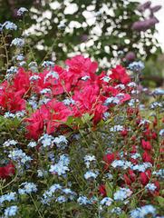 farbenfroher Frühling