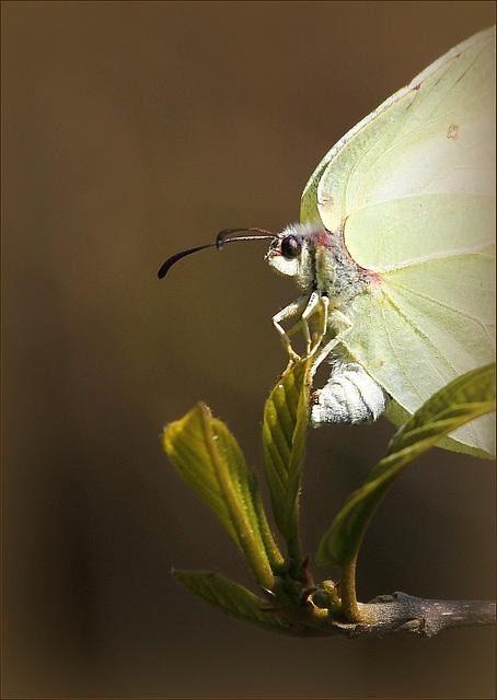 fil(et) à papillons - Page 8 41762696.efb86a00.640
