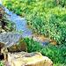 Farm stream.