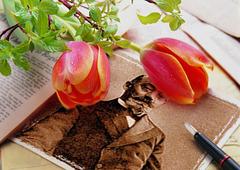 D-ro Zamenhof kun tulipoj