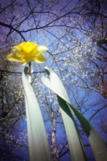 Spring Pinhole #1