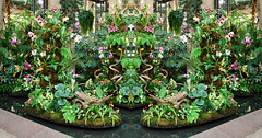 Orchid Extravagaza