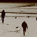 Dog detecting