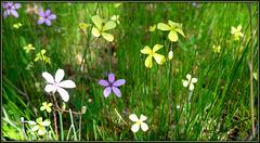 Soft-focus Spring wild flowers