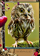 Oh, funny owl