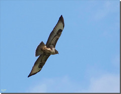 Buse variable.