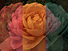 Fantasy roses