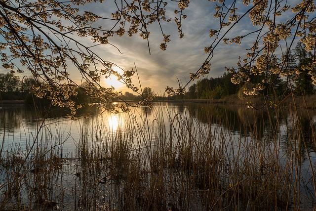 Lever du Soleil sur un Lac