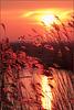 Look through: Sunrise in the Eempolder... 1