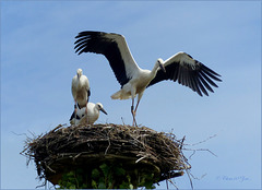 Flying lessons...
