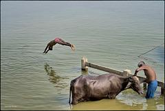 Le grand plongeon dans le Gange