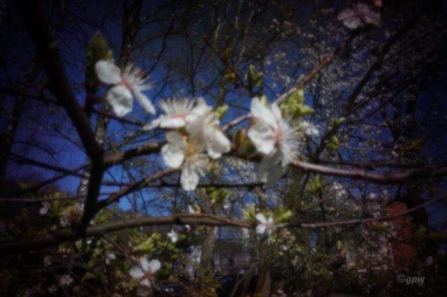 Spring Pinhole #2