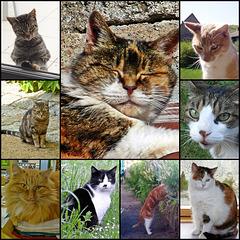 8 Août: Journée internationale du chat [ON EXPLORE]