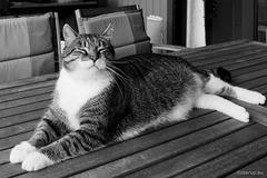 Happy Bastian for Happy Caturday
