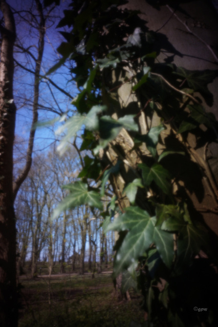 Forest Pinhole #1