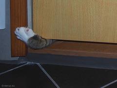 I'm here, open that door - Happy Caturday