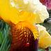Der Bart der Bart-Lilie (Iris).  ©UdoSm