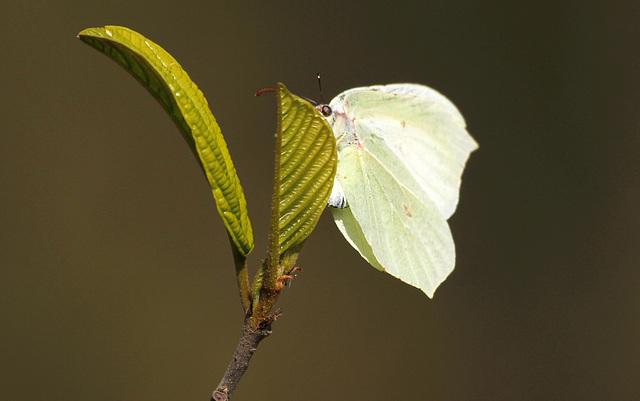 fil(et) à papillons - Page 8 41762736.3f9ec28f.640