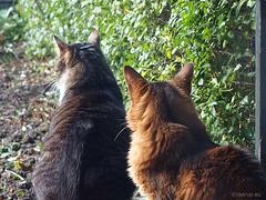Bird watchers - Explored 12.10.2017, #228