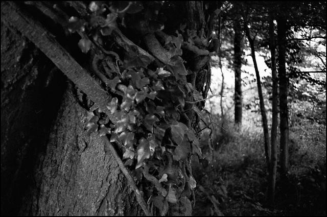 Woods, Dorset.