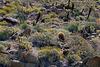 Xeriscape - Anza Borrego Desert
