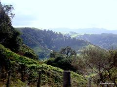 Hilly Landscape.