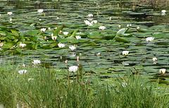 ...Lac de St Léger à Montclar...