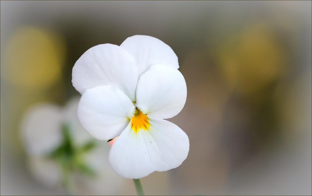 Une fleur par jour.... - Page 11 47612748.98efff96.1024