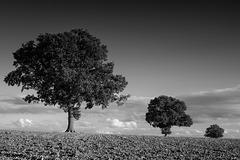Sept 9: Three trees