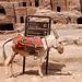 Petra parking lot